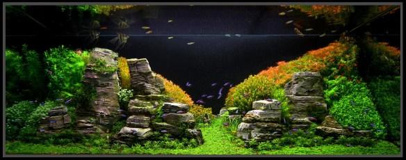 aquario_plantado_aquapaisagismo_10