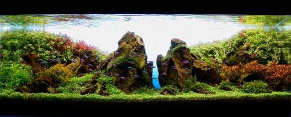 aquario_plantado_aquapaisagismo_11