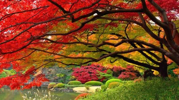japanese-garen-autumn