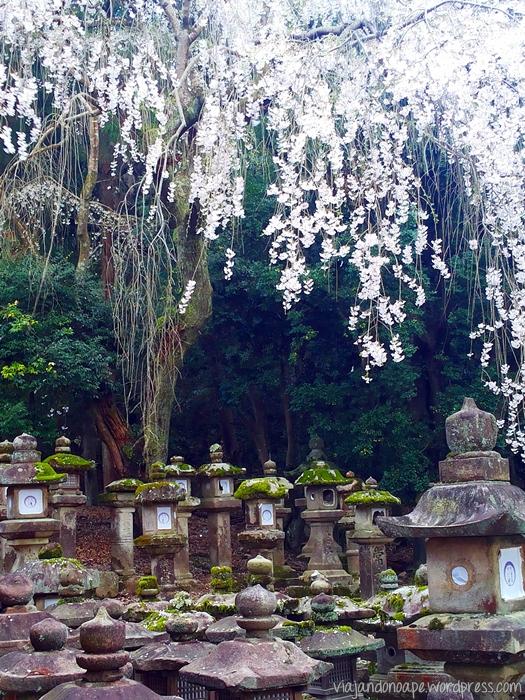 lanternas de pedra_Nara