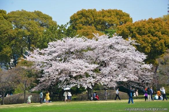 Shinjuku Gyoen_Tokyo_parque