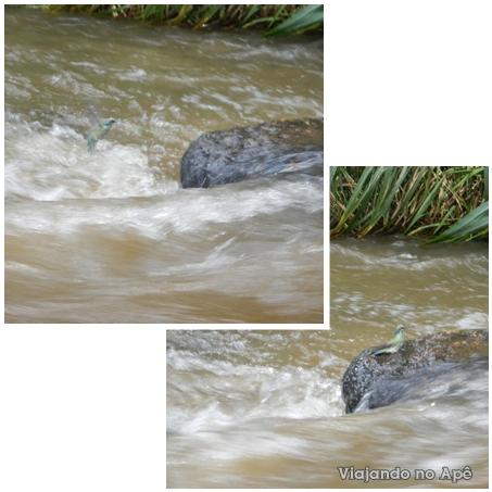 beija flor se refrescando no rio