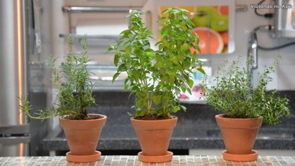 horta em casa ervas temperos vasos