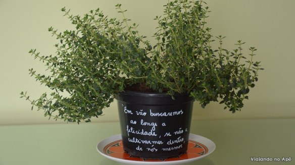 tomilho limao vaso decorado com frase
