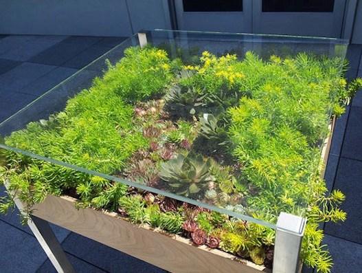 mesa de centro terrario suculentas moveis diferentes