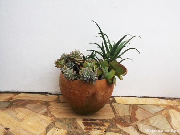 vaso chao suculentas decoracao