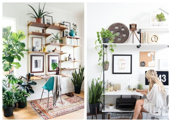 plantas decoraçao home office prateleiras itens decorativos