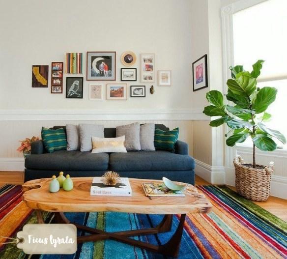 ficus-lyrata-figueira-lira-plantas-dentro-de-casa-ambientes-fechados-internos-decoracao-4