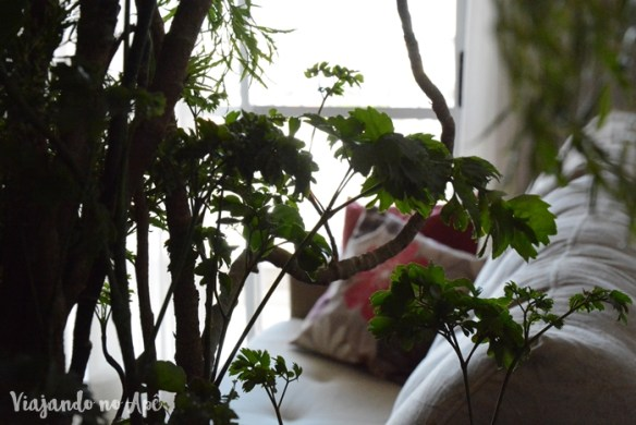 plantas-dentro-de-casa-apartamento
