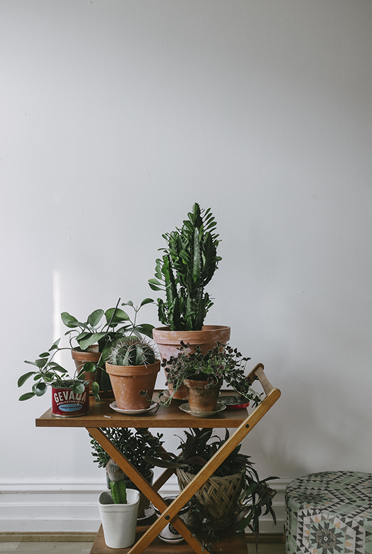 carrinho-bar-com-plantas vasos barro terracota
