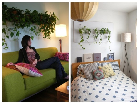 jiboia na decoração plantas ambientes internos plantas suspensas parede sala quarto