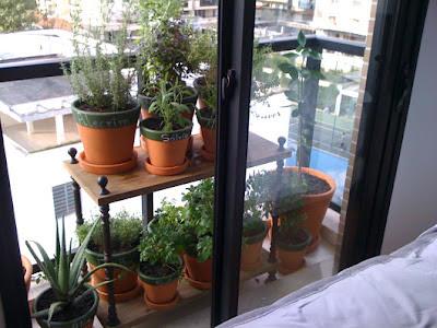 horta na varanda pequena