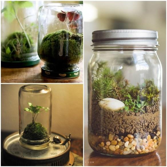 terrarios potes de vidro