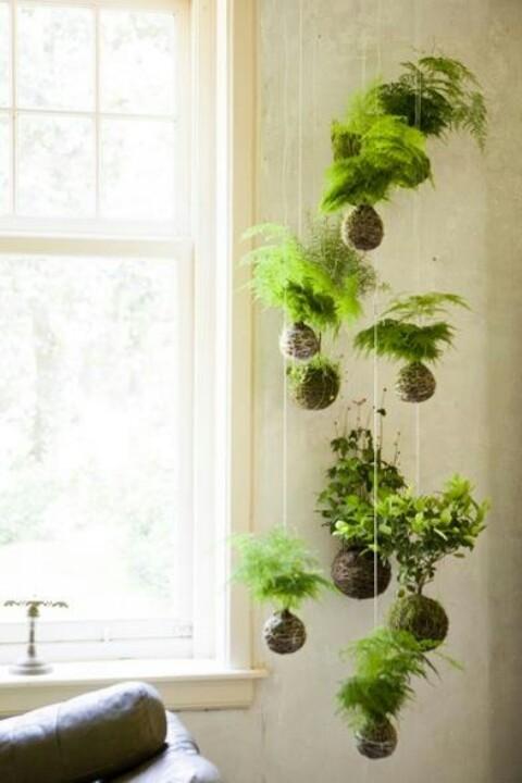 composiçao plantas suspensas