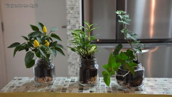 plantas em potes de vidro