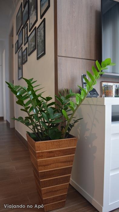 zamioculca plantas dentro de casa