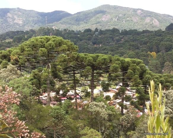araucarias monte verde minas gerais
