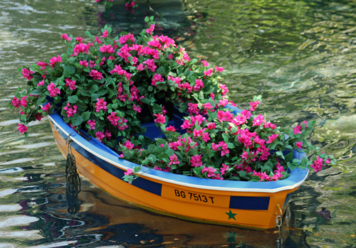 flores no barco