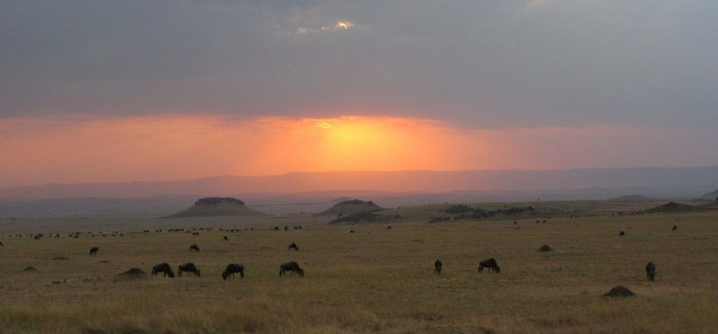 miniatura video africa