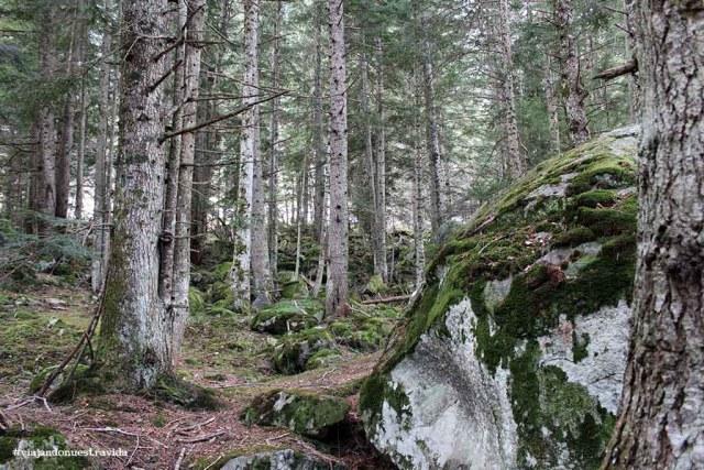 bosc del gerdar