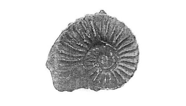 fosil peruano