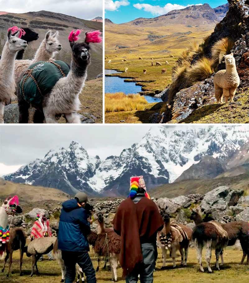 Perú se une a Tencent para promocionar el turismo y la alpaca en China