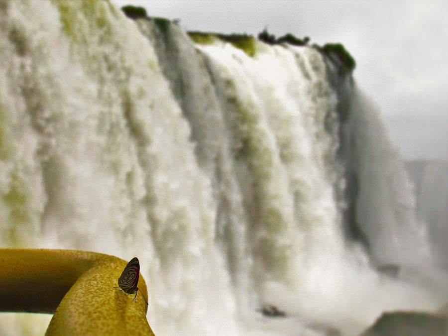 Cataratas Iguazu mariposa Vx1S