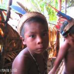 Selva Amazónica: El lado salvaje de la naturaleza.