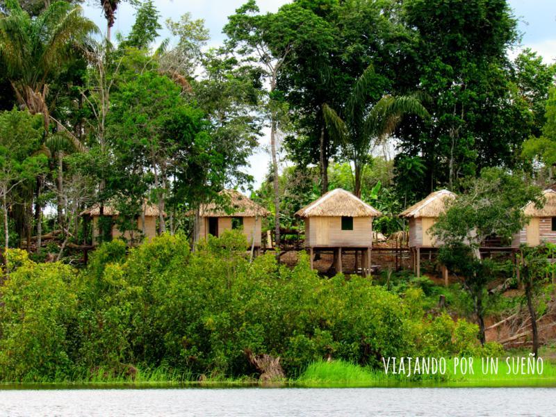 Selva del Amazonas: El lado salvaje de la naturaleza.