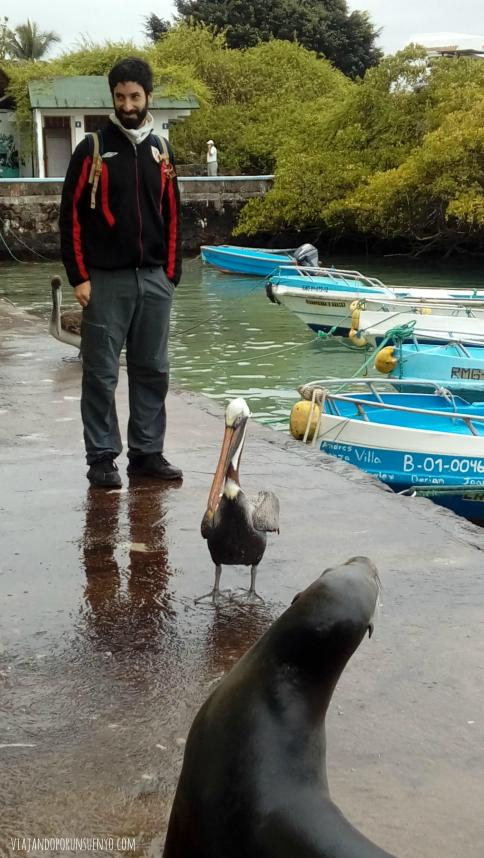 Juan Vx1S galápagos