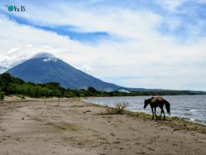 Caballo Ometepe Nicaragua png