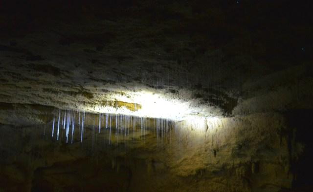 glow worms en cuevas de waitomo en nueva zelanda