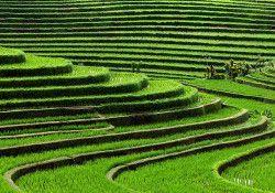 Terraza de arroz jatiluwih