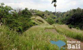 Recorrido Ubud - Arrozales Campuhan