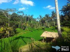 Excursion Templo Gunung Kawi Ubud Bali