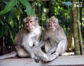 bosque-monos-alas-kedaton-1