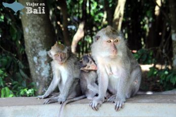 bosque-monos-alas-kedaton-3