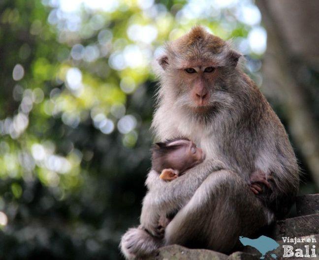 bosque-monos-alas-kedaton