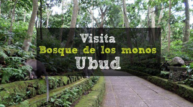 visita-bosque-de-los-monos-ubud