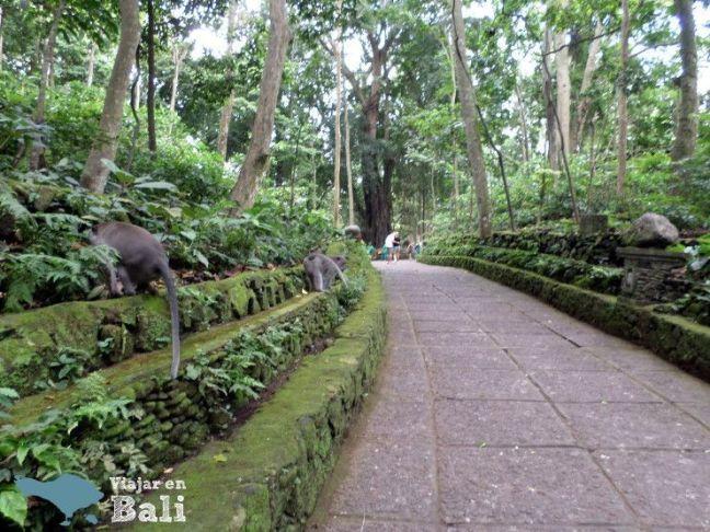 Bosque de los monos Ubud