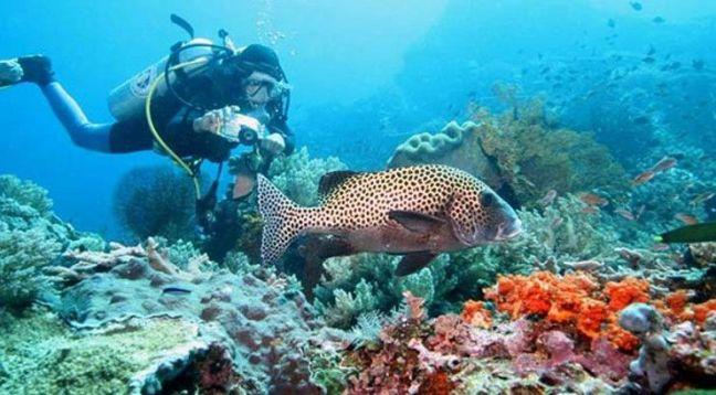 Snorkeling-Plongee-Bali-Nusa-Lembongan-Raie-Manta-Mola-Mola-Poisson-Lune-Bali