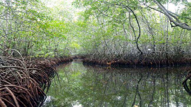 mangrove-nusa-lembongan-bali