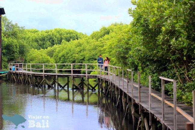 trekking-mangrove-bali-2