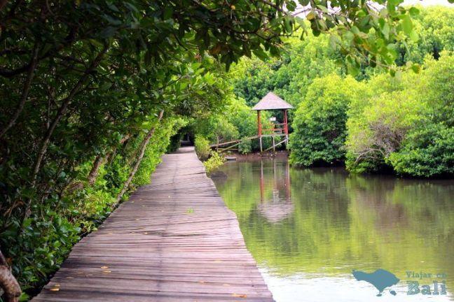 trekking-mangrove-bali