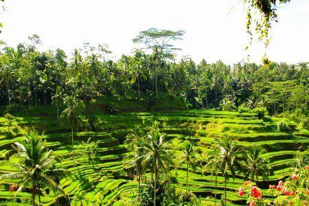 Paquete Viaje Bali 10 dias