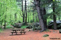 """Área recreativa """"Els Pins"""" cerca de Sant Privat d'en Bas"""