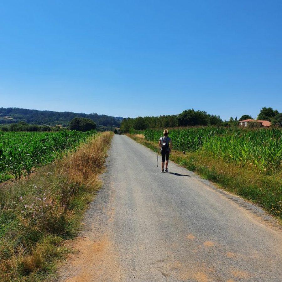 Caminando con la ayuda del palo hacia Amenal