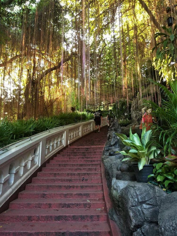 Escaleras subida Monte Dorado