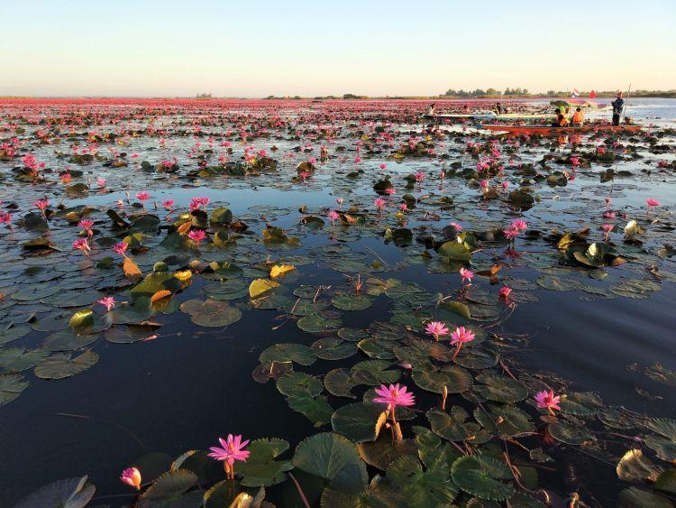 Turistas en el Lago de Lotos Rojos