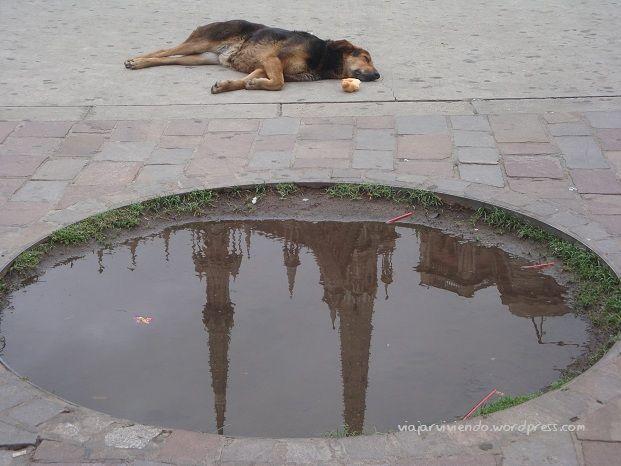 reflejos en Córdoba Argentina